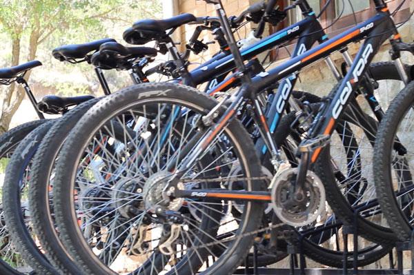 Alquiler de bicicletas. Actividades de verano